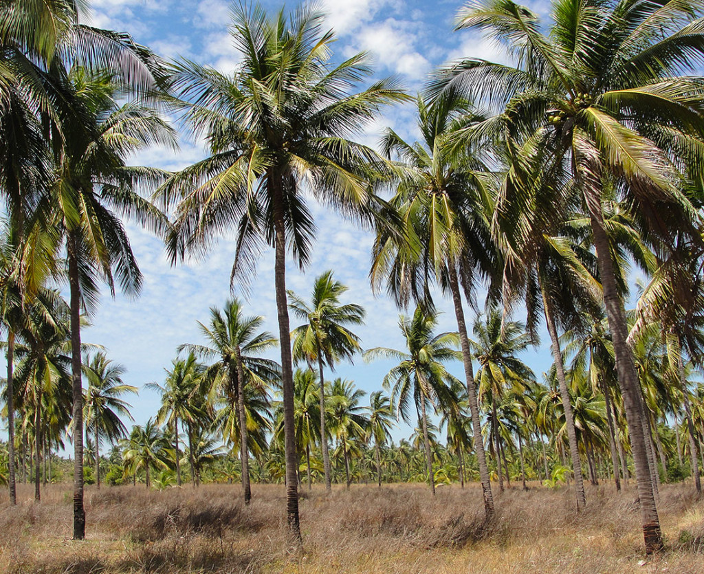 CoconutFarm