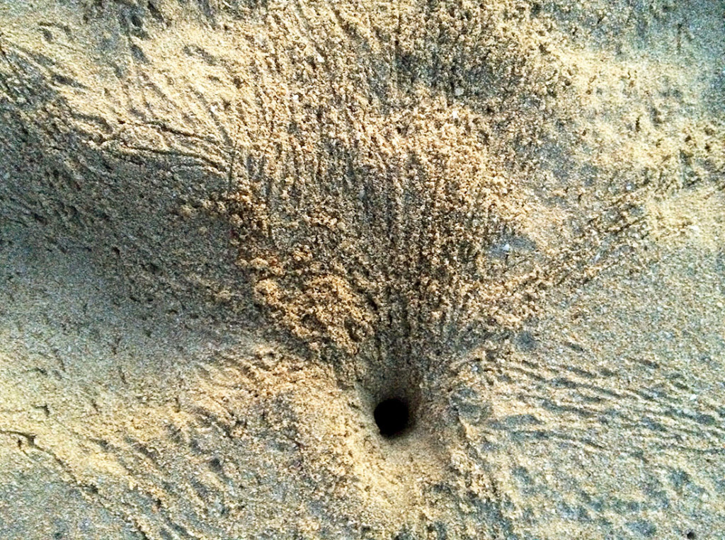 GhostBurrow