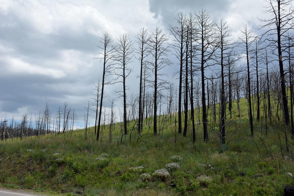 Little Bear Fire, June 7, 2012, Three years later